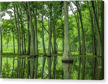 Usa, Louisiana, Miller's Lake Canvas Print