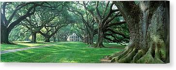 Usa, Louisiana, New Orleans, Oak Alley Canvas Print by Panoramic Images