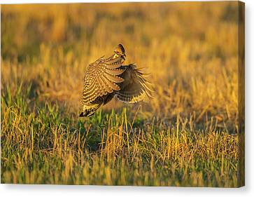 Usa, Nebraska, Sand Hills Canvas Print