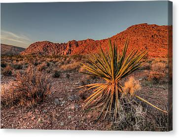 Usa, Nevada Red Rock Canyon National Canvas Print by Brent Bergherm