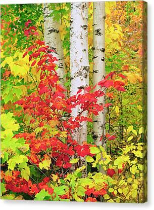 Usa, New York, Adirondack Park, Autumn Canvas Print by Jaynes Gallery