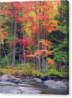 Usa, New York, Autumn In The Adirondack Canvas Print