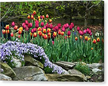 Usa, Ohio Tulips And Phlox Canvas Print by Jaynes Gallery