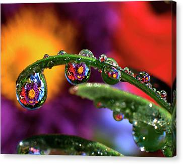 Usa, Oregon, Close-up Abstract Canvas Print by Jaynes Gallery