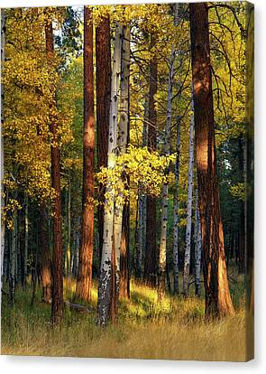 Usa, Oregon, Deschutes National Forest Canvas Print by Jaynes Gallery