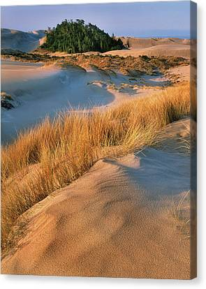 Usa, Oregon, Dunes National Recreation Canvas Print by Jaynes Gallery