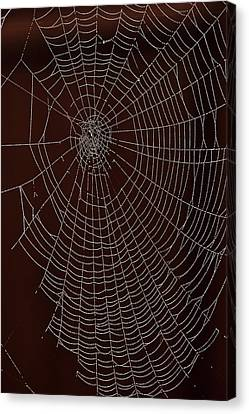 Usa, Oregon, Keizer, Orb Web With Dew Canvas Print by Rick A Brown