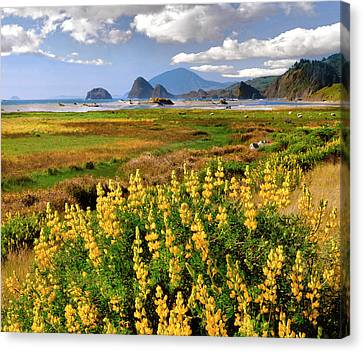 Usa, Oregon Landscape Of Yellow Lupine Canvas Print by Jaynes Gallery