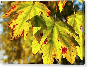 Wayside Canvas Print - Usa, Oregon, Larwood Wayside, Fall by Rick A Brown