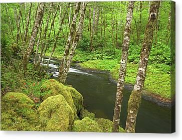 Columbine Canvas Print - Usa, Oregon, Nestucca River by Jaynes Gallery