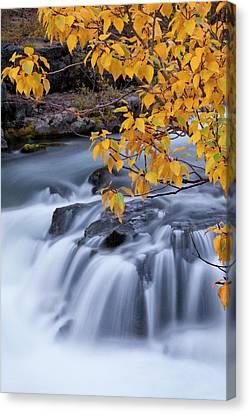Usa, Oregon Rogue River Waterfalls Canvas Print