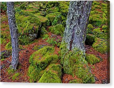 Usa, Oregon, Rogue River Wilderness Canvas Print