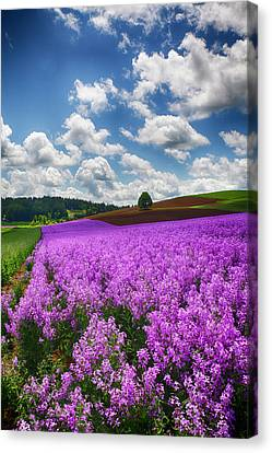 Usa, Oregon, Willamette Valley, Farming Canvas Print by Terry Eggers