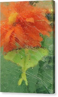 Usa, Pennsylvania, Luna Moth On Orange Canvas Print by Jaynes Gallery