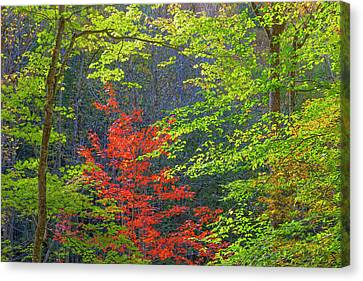 Usa, Tennessee Autumn Foliage Canvas Print by Jaynes Gallery