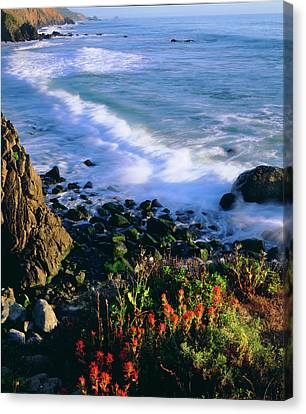 Usa, Wildflowers Along The California Canvas Print by Jaynes Gallery