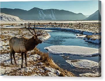 Usa, Wyoming, National Elk Refuge Canvas Print by Jaynes Gallery