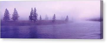Usa, Wyoming, View Of Trees Lining Canvas Print