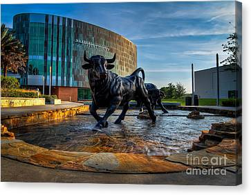 Usf Bulls Fountain Canvas Print by Karl Greeson