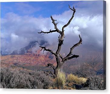 Utah Usa Pinyon Pine Snag Above Virgin Canvas Print by Scott T. Smith