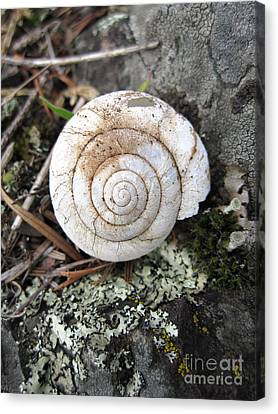 Vacant Shell Canvas Print by Devin  Cogger