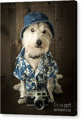 Vacation Dog Canvas Print