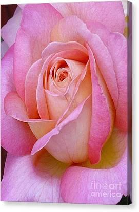 Valentine Pink Rose Bud Canvas Print