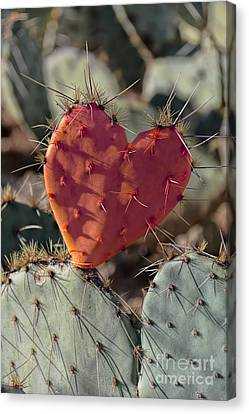 Valentine Prickly Pear Cactus Canvas Print by Henry Kowalski