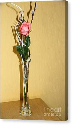 Valentine's Rose I Canvas Print by Christiane Schulze Art And Photography