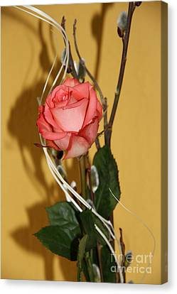 Valentine's Rose II Canvas Print by Christiane Schulze Art And Photography