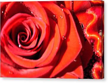 Valentine's Canvas Print by Sarah OToole