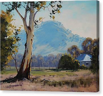 Valley Gum Tree Canvas Print by Graham Gercken
