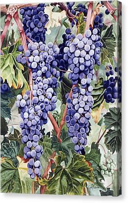 Valley Vines Canvas Print by Gael Graysen
