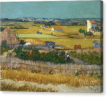 Van Gogh Wheatfield 1888 Canvas Print by Granger