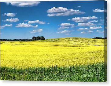 Van Gogh Would Have A Field Day Canvas Print by Alexandra Jordankova