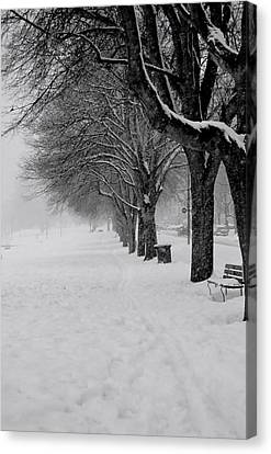 Vancouver Winter Trees Canvas Print