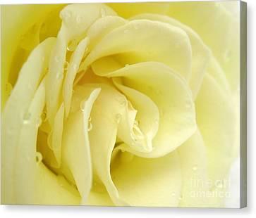 Vanilla Swirl Canvas Print by Patti Whitten