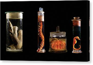 Various Animal Specimens Canvas Print by Natural History Museum, London