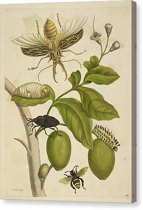 Graf Canvas Print - Various Insects Around A Plant by British Library