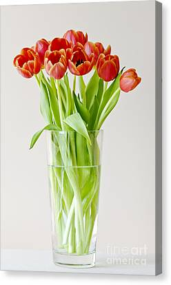 Vase Of Tulips Canvas Print by Dee Cresswell