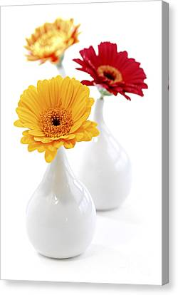 Vases With Gerbera Flowers Canvas Print by Elena Elisseeva