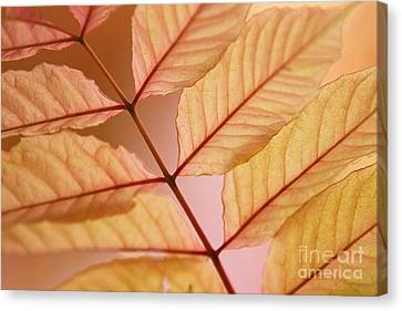 Veins Canvas Print by Andrew Brooks