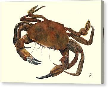 Velvet Crab Canvas Print by Juan  Bosco
