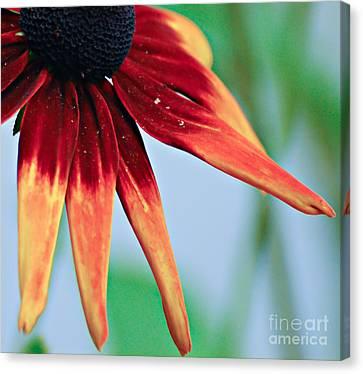 Velvet Petals Canvas Print
