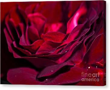 Velvet Red Rose Canvas Print by Jan Bickerton