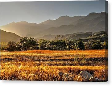 Ventura River Preserve Canvas Print