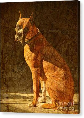 Vermeer's Dog Canvas Print by Judy Wood