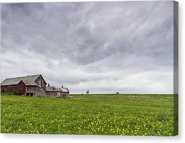 Vermont Barn Grass Dandelion Field Storm Clouds Canvas Print by Andy Gimino