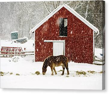 Barn Storm Canvas Print - Vermont Christmas Eve Snowstorm by Edward Fielding