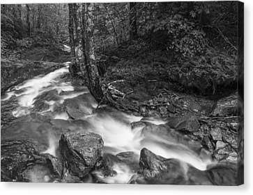 Vermont Forest Foliage Black And White Waterfall Canvas Print by Andy Gimino